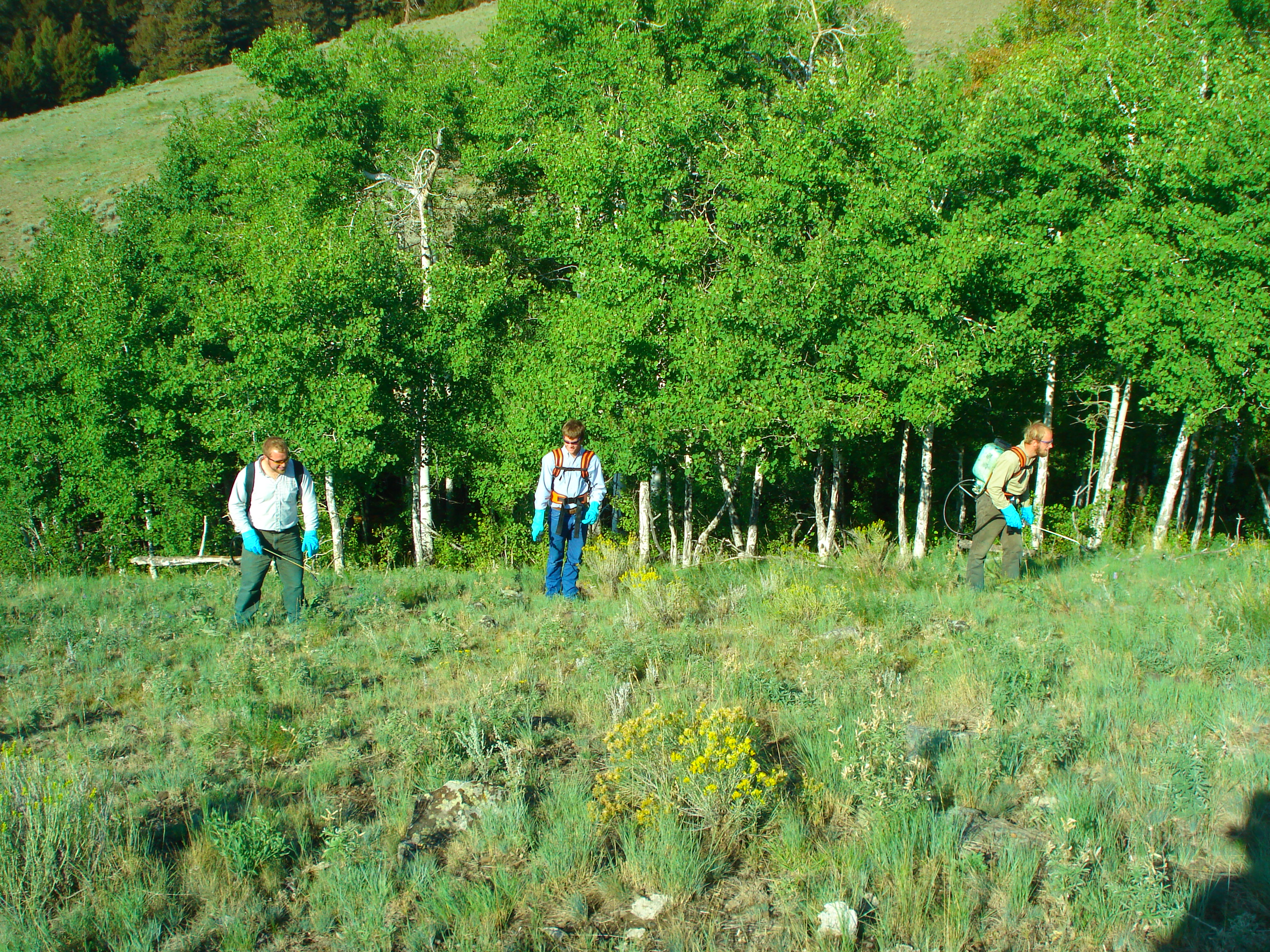 Forestland Noxious Weed Control